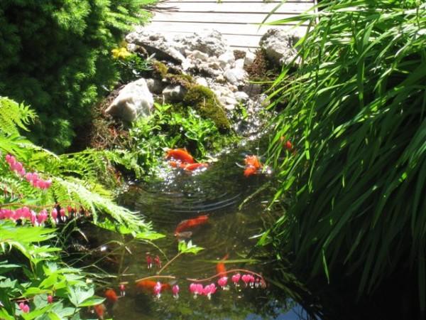 gullfisk_leker
