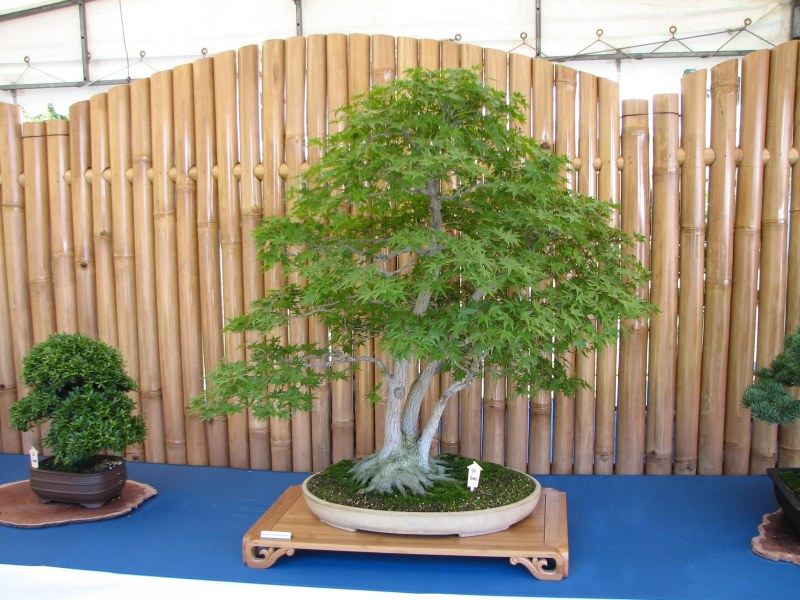 bonsai 90