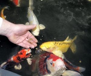 fiskelykke 1